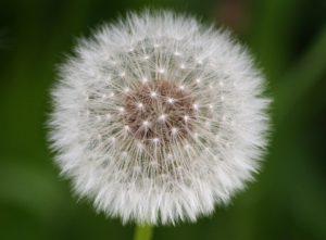tratamientos alergias