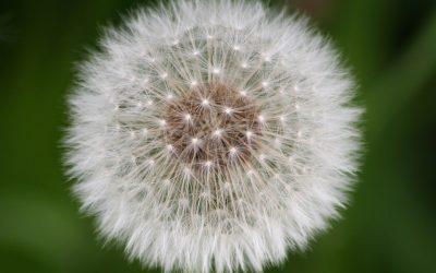 Alergias, qué soluciones te ofrecemos